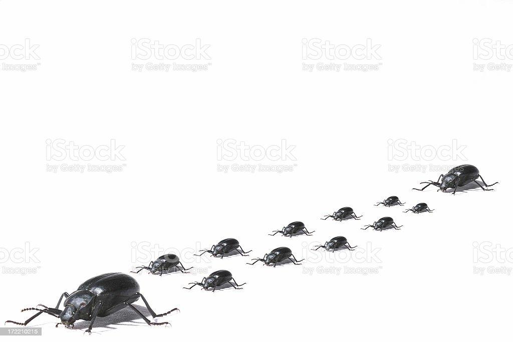 Beetle escort royalty-free stock photo