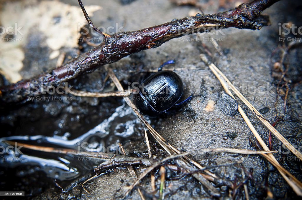 beetle in its natural environment stock photo