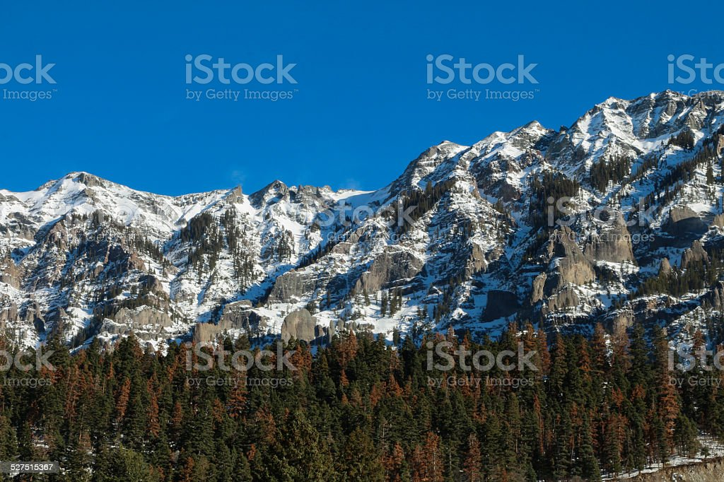 Beetle kill forest in Ouray, rugged mountains and blue sky stock photo