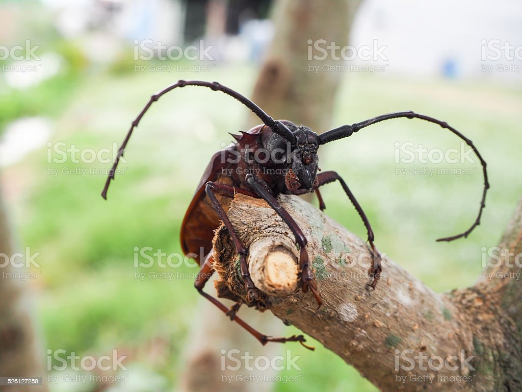 Beetle on branches of a tree stock photo