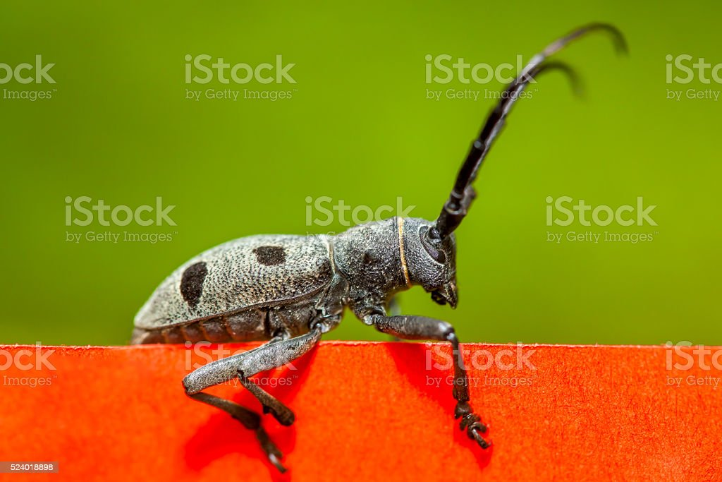 beetle on red and green background stock photo