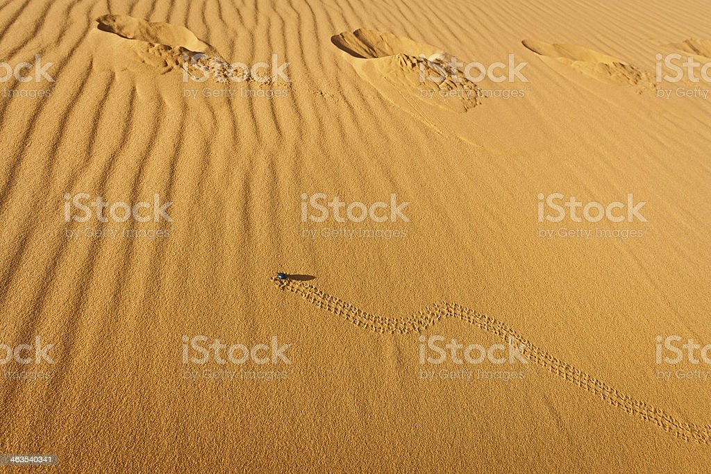 Beetle on Sand in Erg Chebbi Desert, Morocco, Africa stock photo
