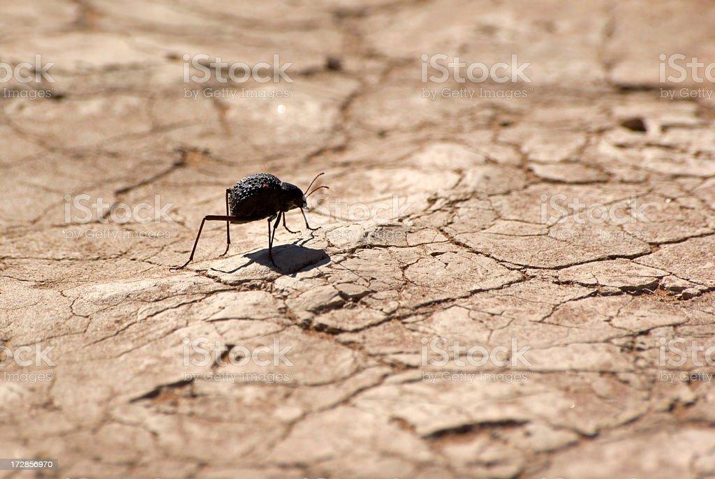 beetle royalty-free stock photo