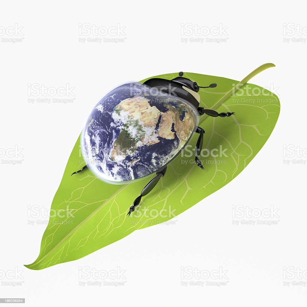 Beetle (Environmental Conservation concept) stock photo