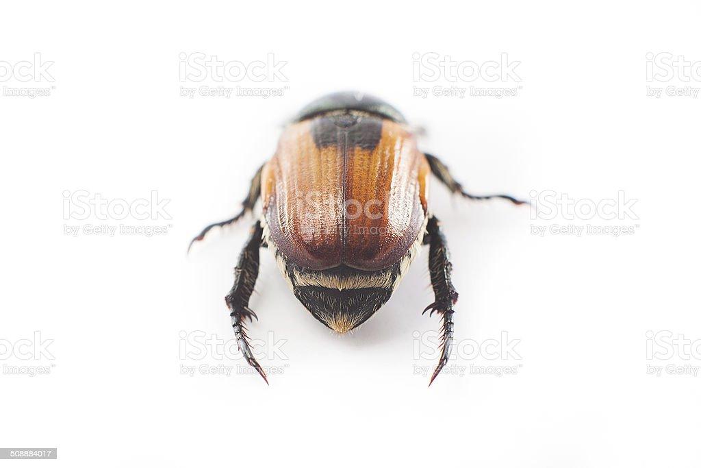 beetle stock photo