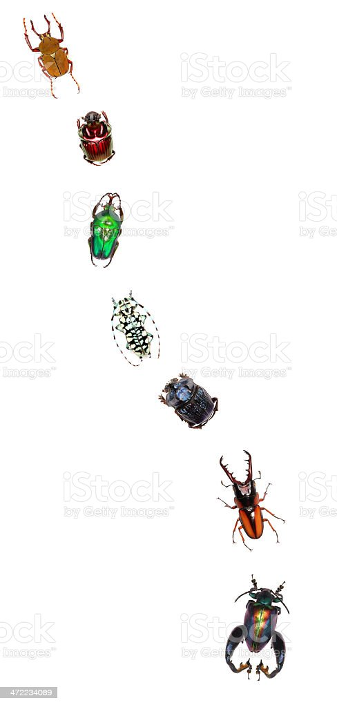 Beetle row stock photo