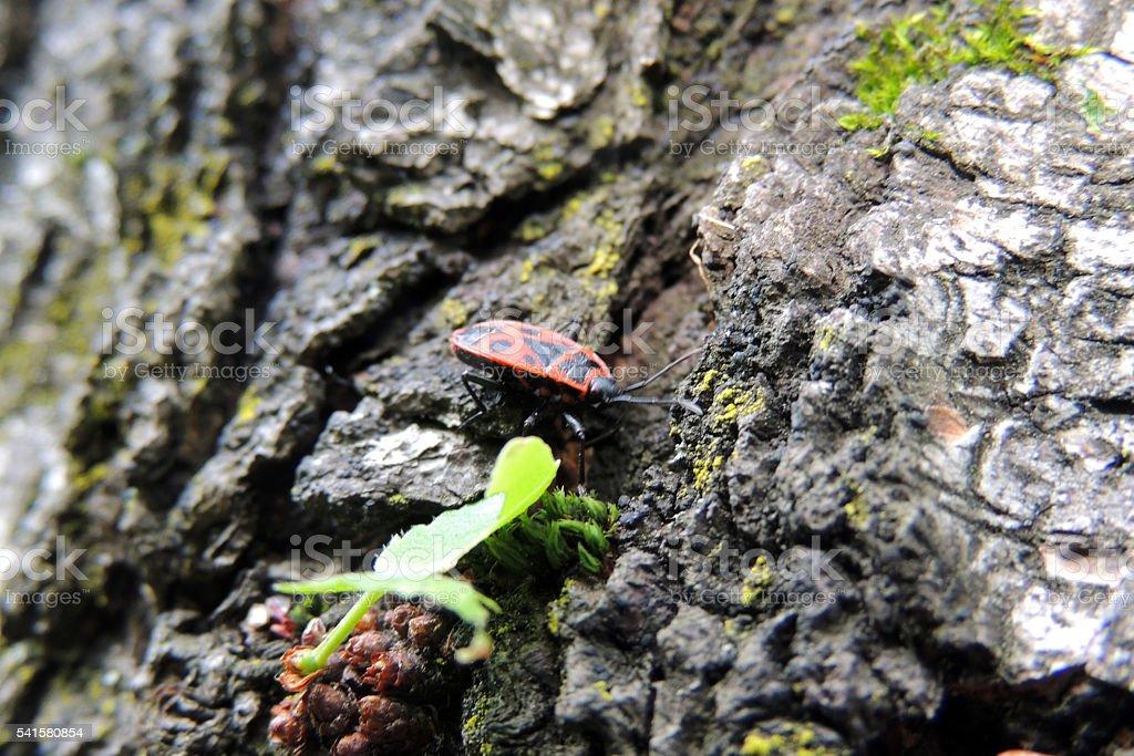Beetle soldier stock photo