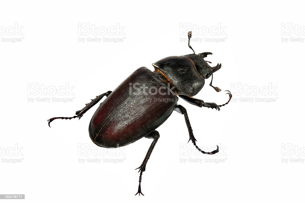 Beetle-2 stock photo
