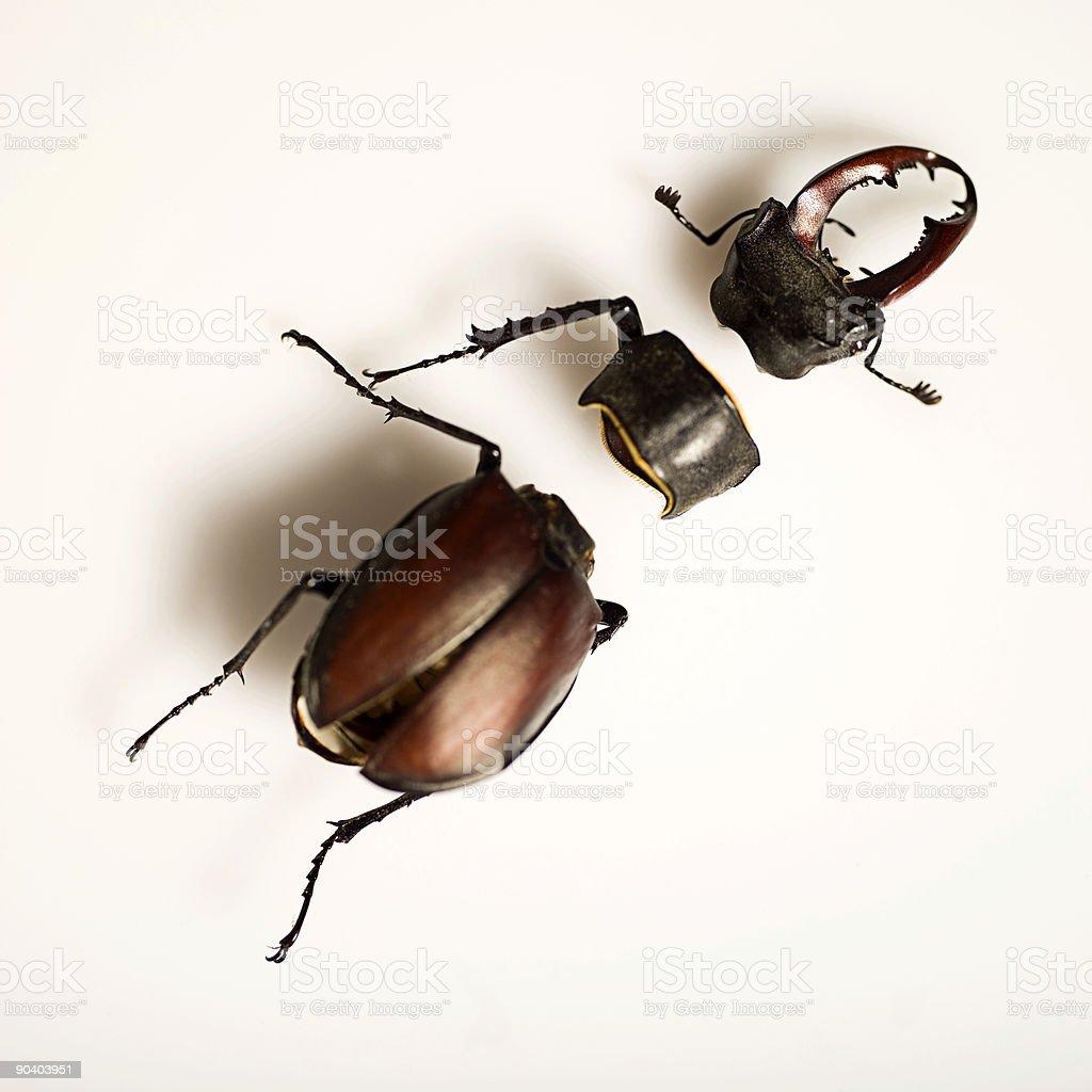 Beetlejuice stock photo
