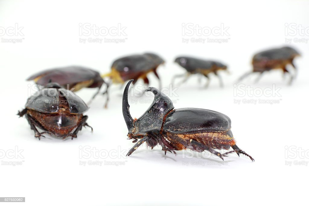 Beetles Marching. stock photo