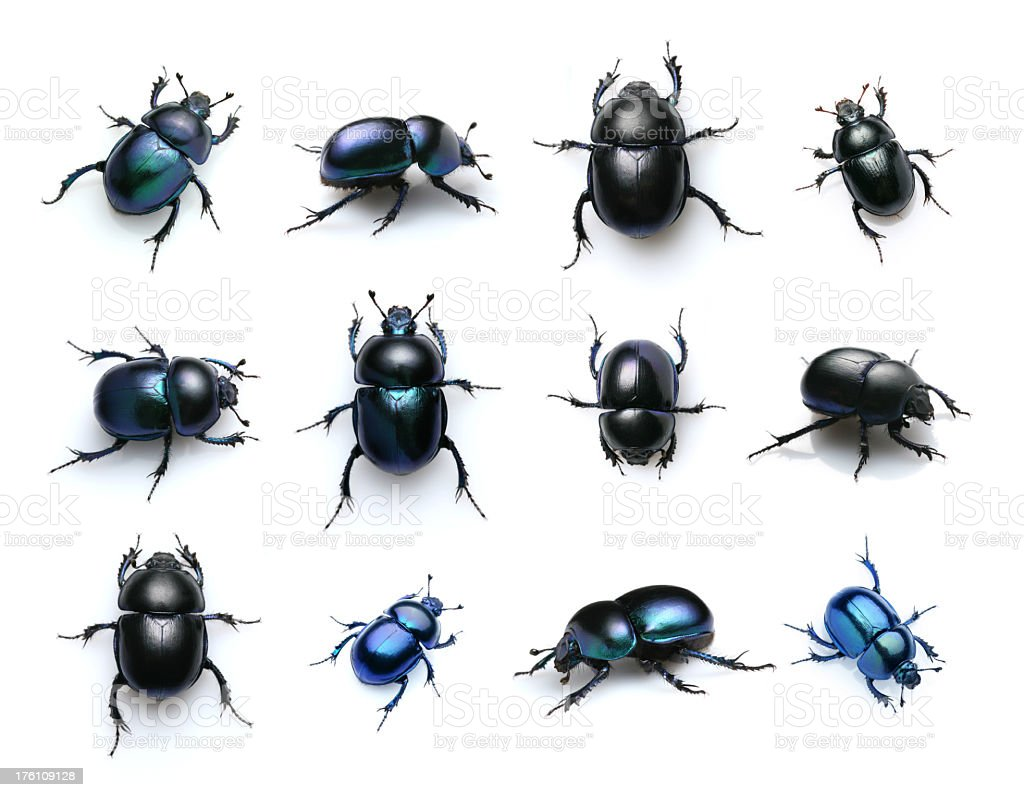 beetles stock photo