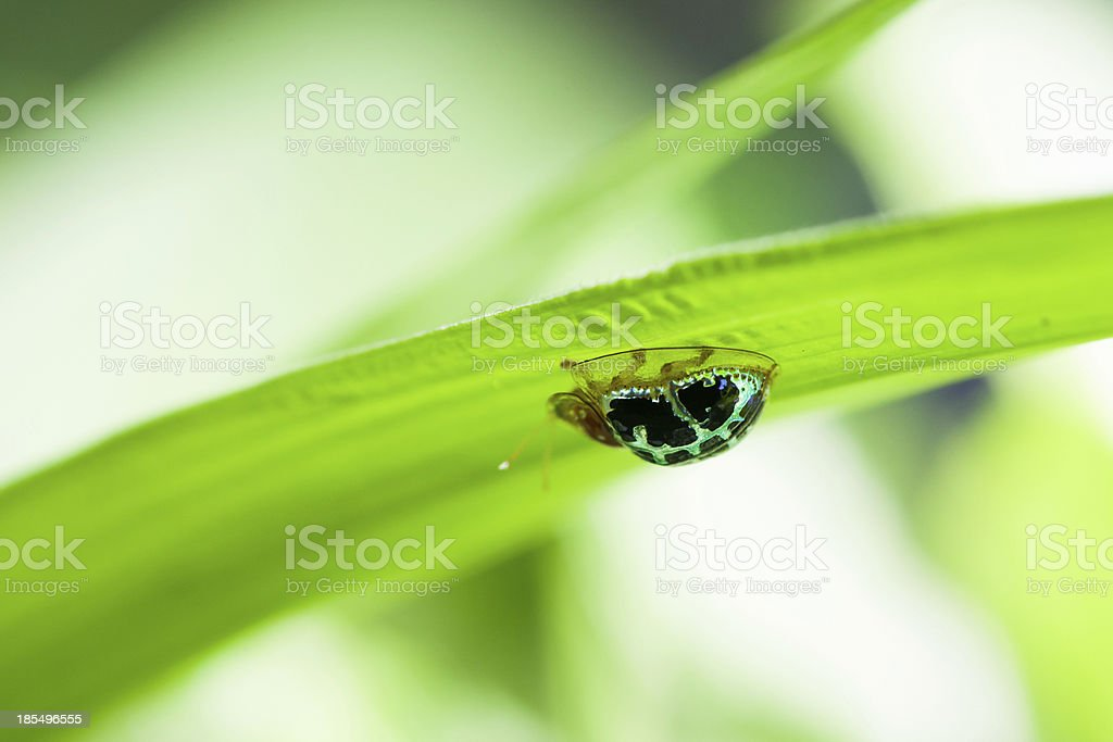 Beetles. royalty-free stock photo