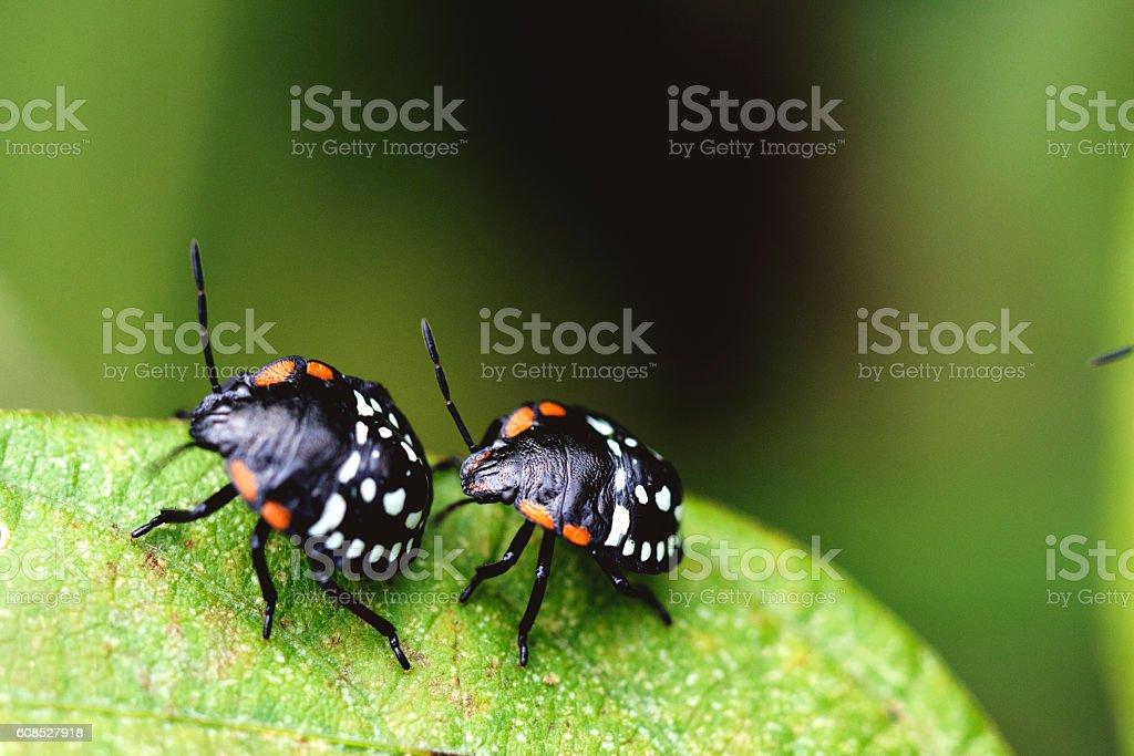 beetles stock photo