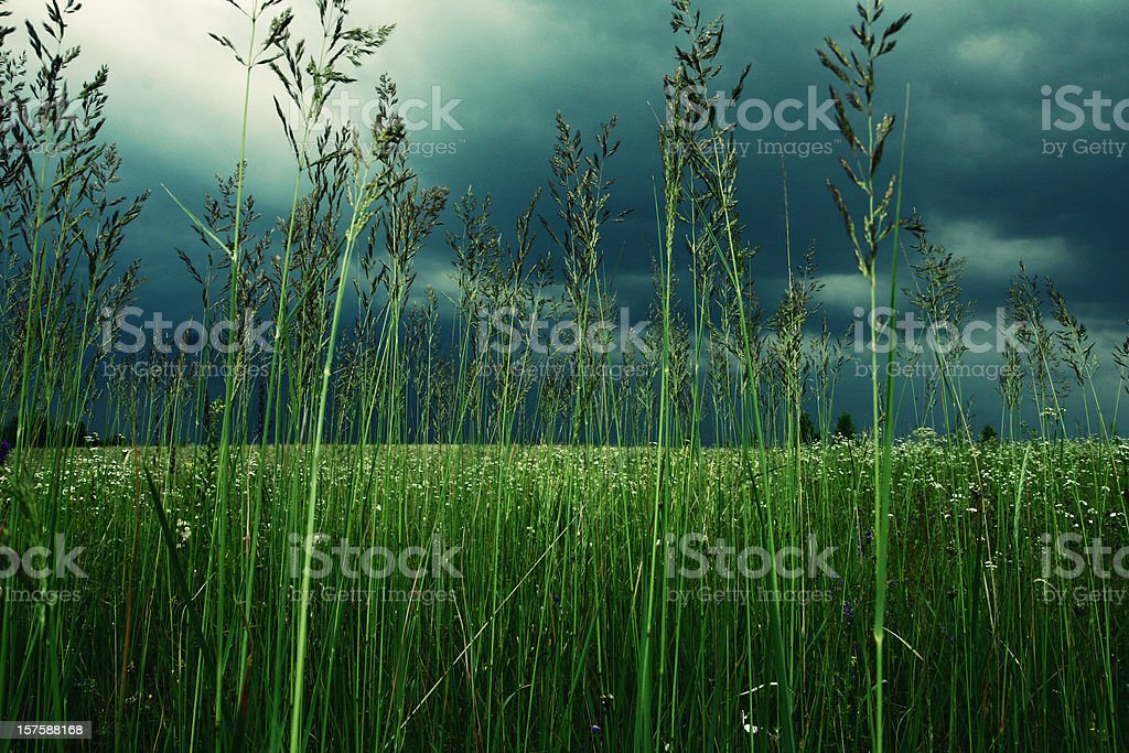 before a thunderstorm royalty-free stock photo