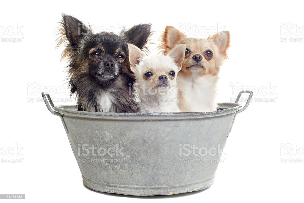 before the bath royalty-free stock photo