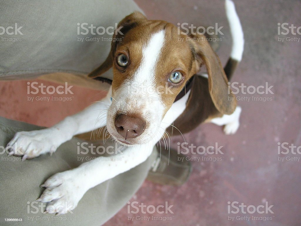 Begging Dog stock photo