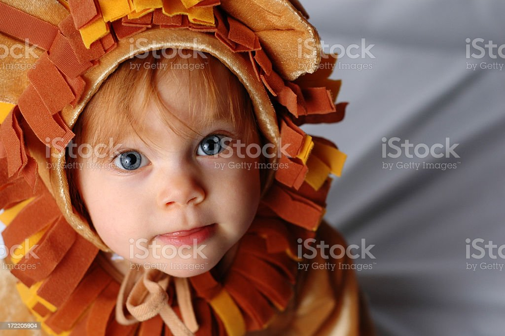 Begging Little Lion royalty-free stock photo