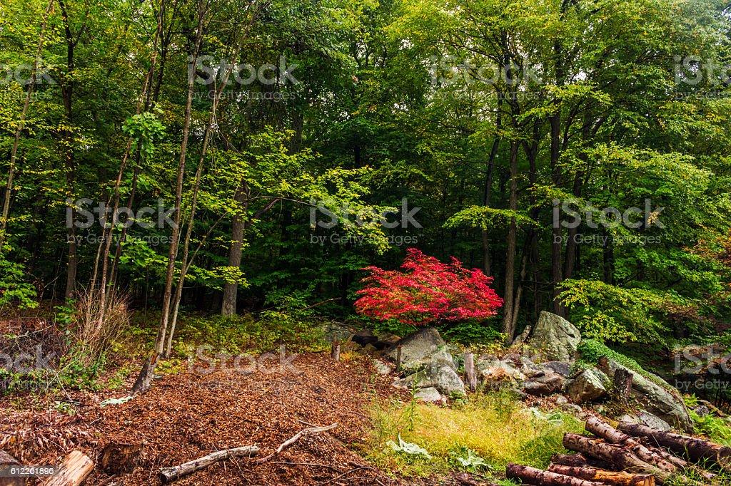 Beginning of New England Fall stock photo