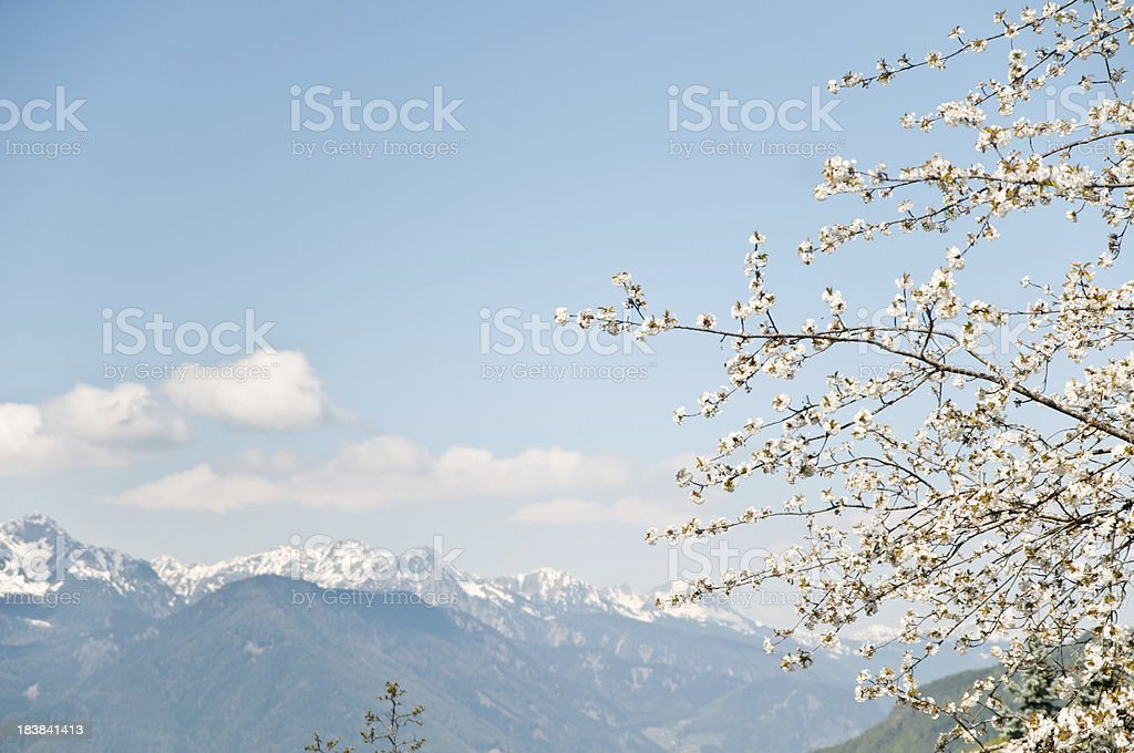 beginning of spring in the Alps with snow-covered mountain range royalty-free stock photo