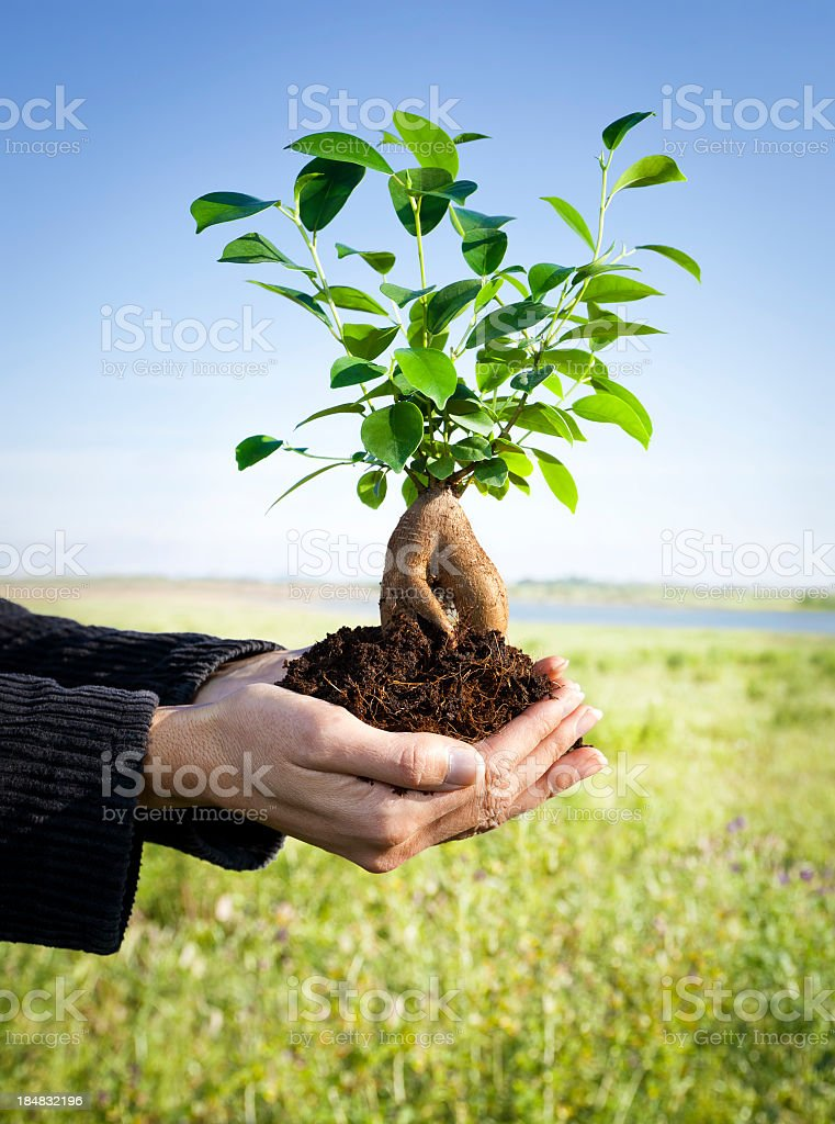 Beginning royalty-free stock photo
