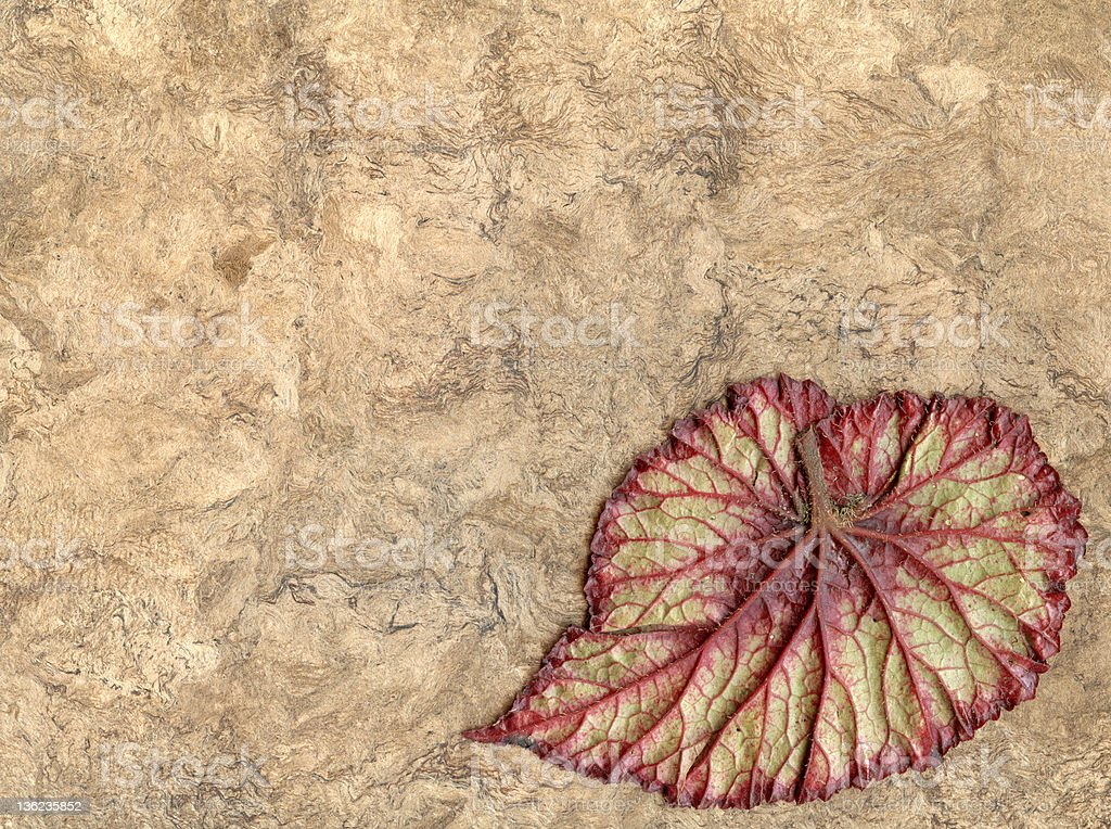 Begonia Leaf with Red Veins On Bark Paper royalty-free stock photo