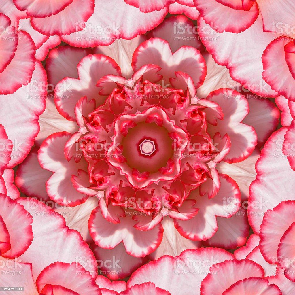 Begonia Petal Mandala stock photo