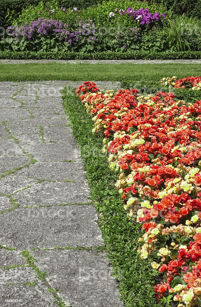 Begonias growing along the stone path royalty-free stock photo