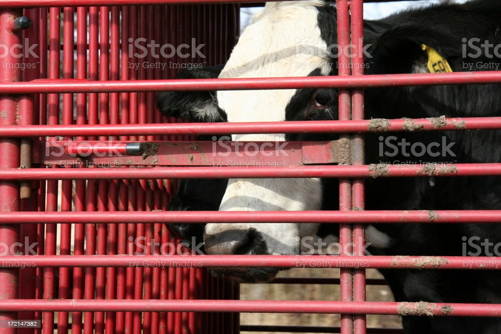 Behind Bars royalty-free stock photo