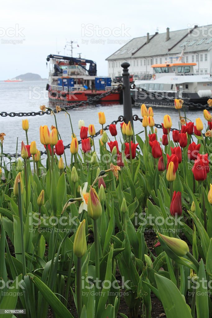 behind sea of flowers stock photo
