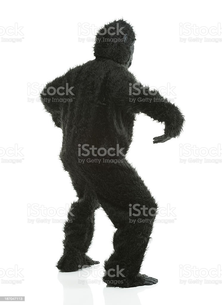Behind view of gorilla royalty-free stock photo