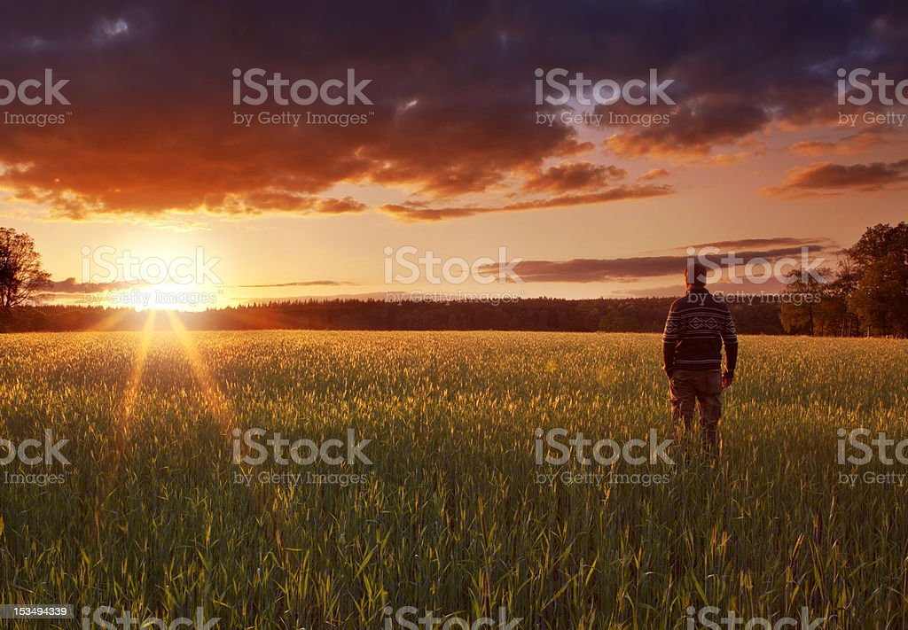 Behind view of man walking in a field at sunrise stock photo