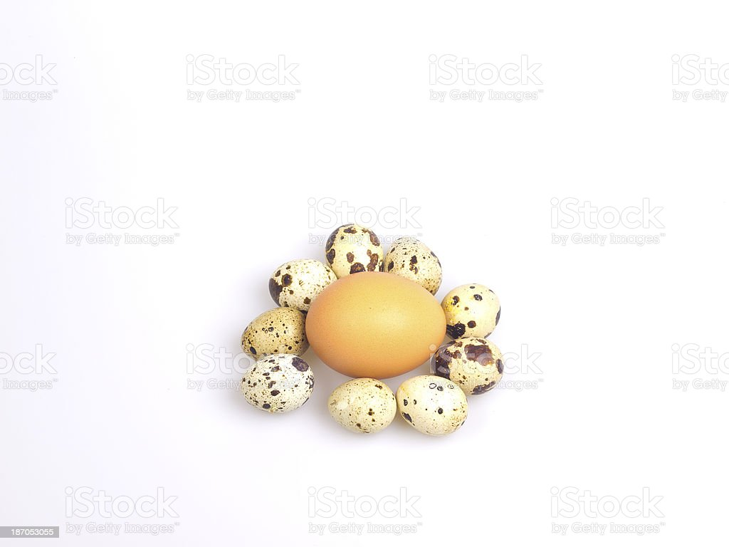 Beige chicken egg surrounded by spotted quail eggs on white. royalty-free stock photo