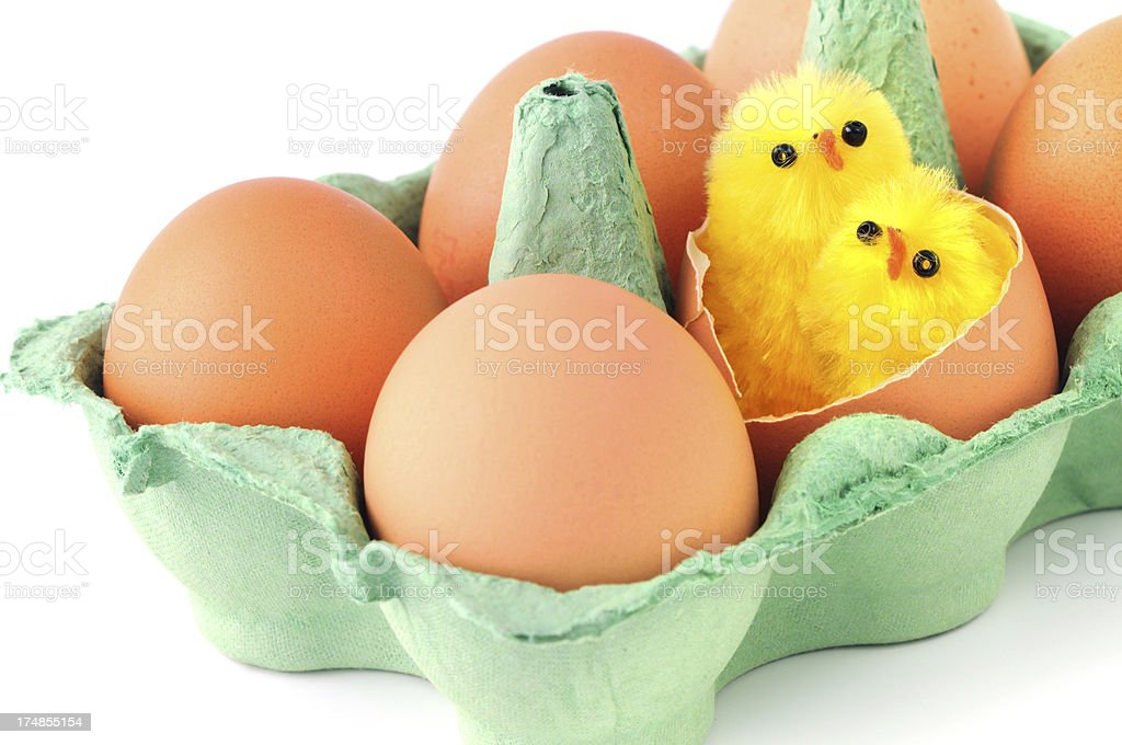 beige eggs with two young chicken in green carton stock photo