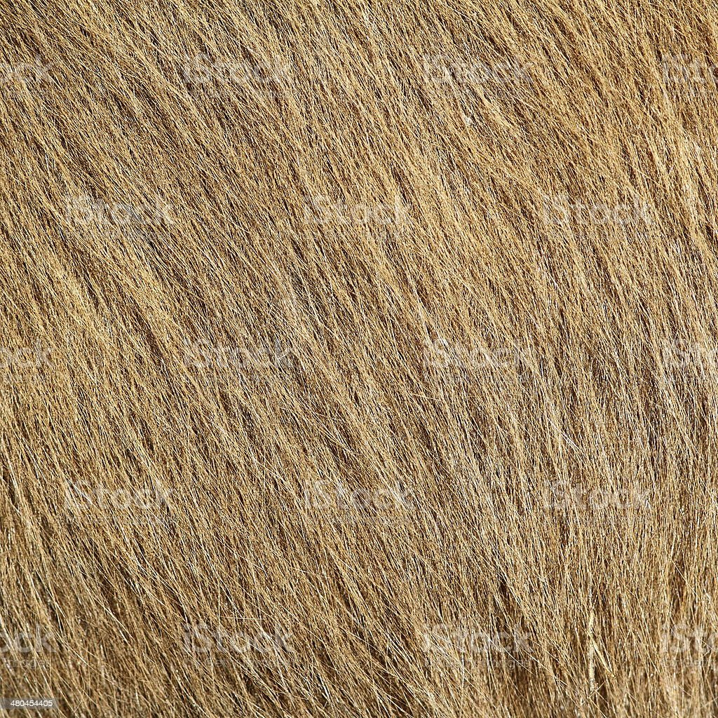 beige pony textured hair stock photo