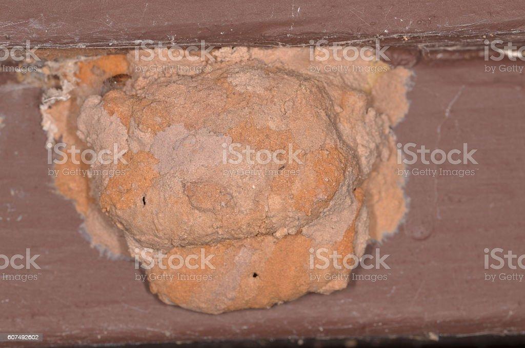 Beige shades on mud dauber wasp  nest stock photo