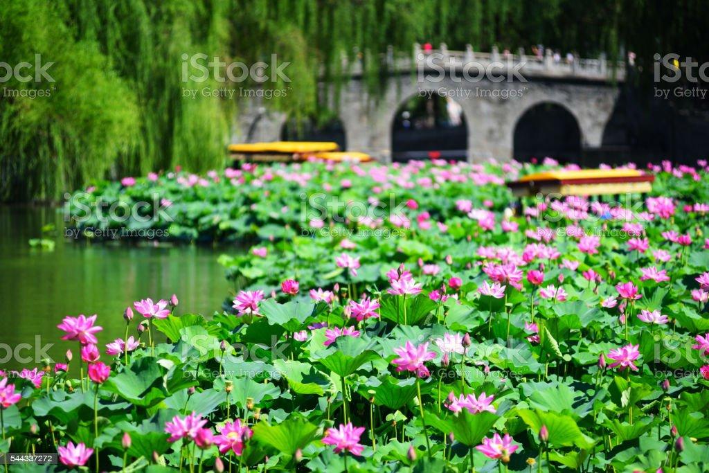 Beihai park scenery in summer in Beijing,China. stock photo