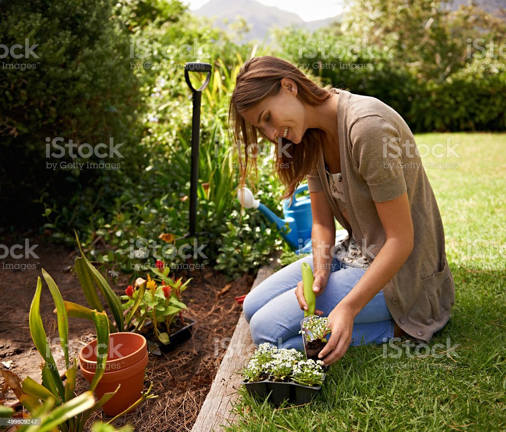 Being careful not to damage any plants stock photo