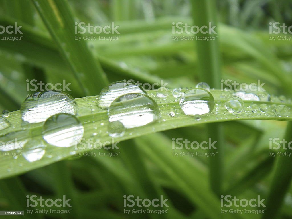 Bejeweled Grass stock photo