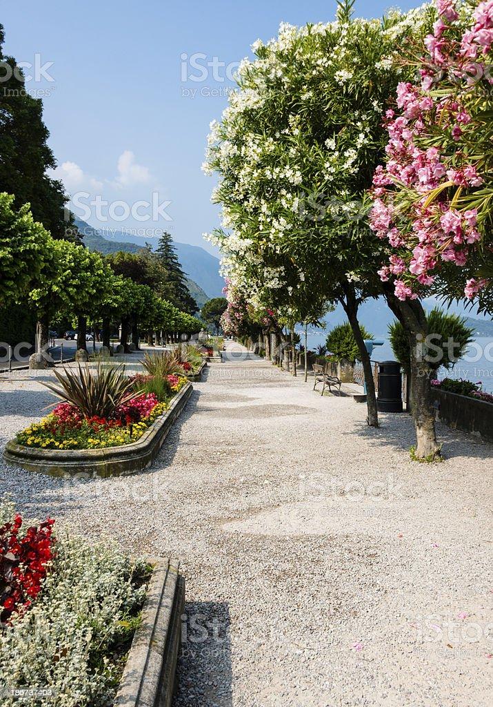 Belaggio, Italy- Colorful trees along promenade in public park-XXXL royalty-free stock photo