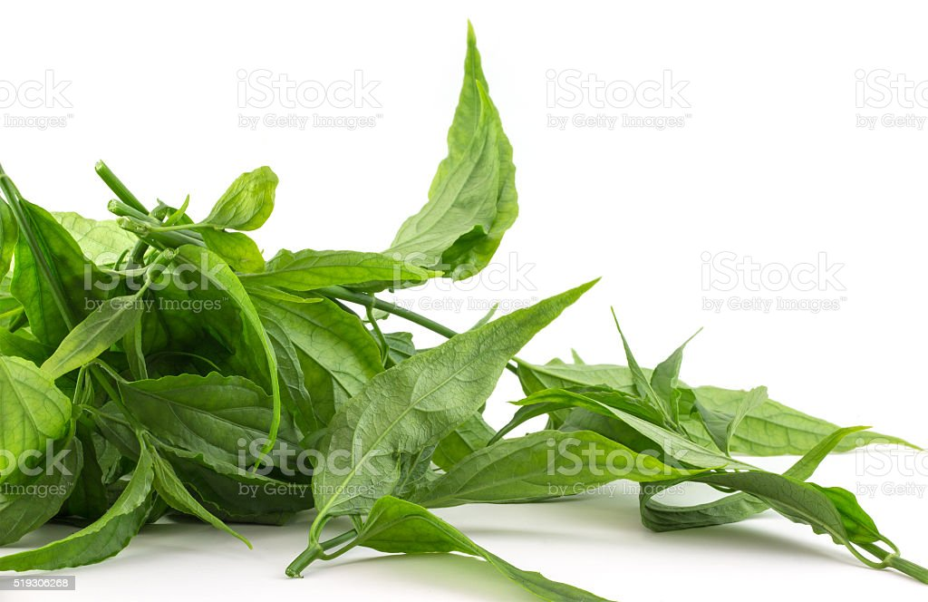 Belalai gajah. Acanthaceae family. Isolated. Copy-space. stock photo