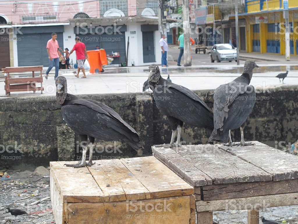 belem port stock photo