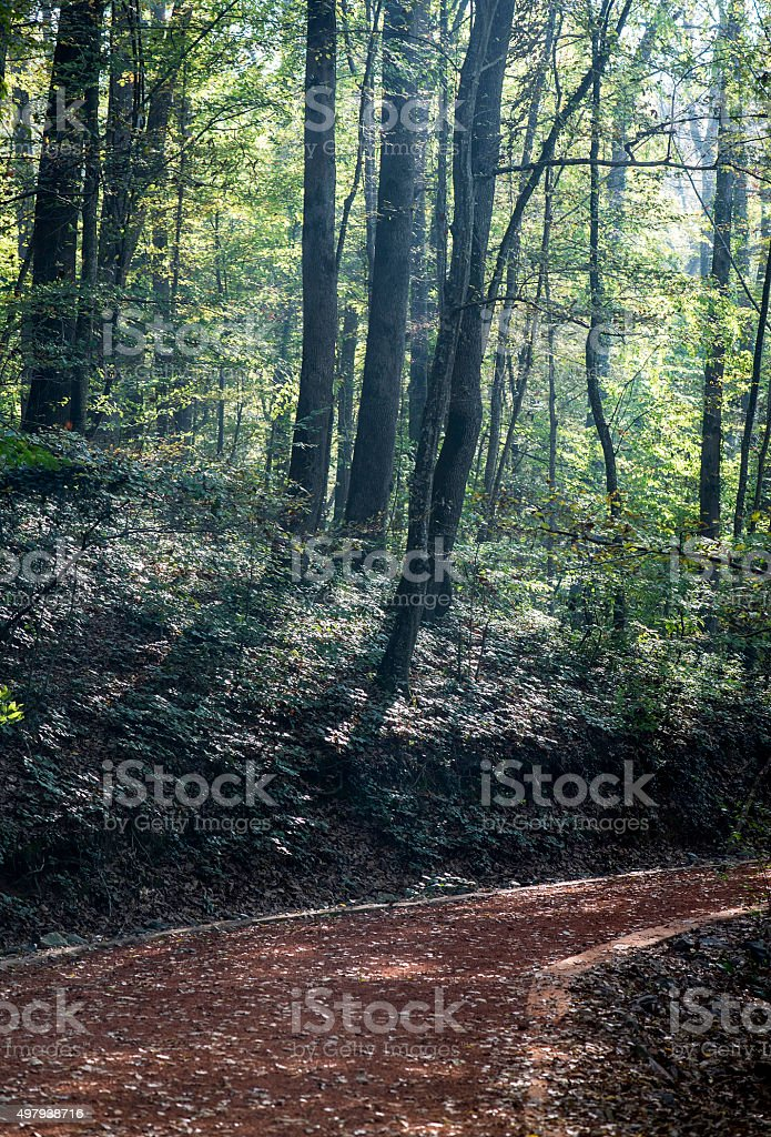 Belgrad Forest in Istanbul stock photo
