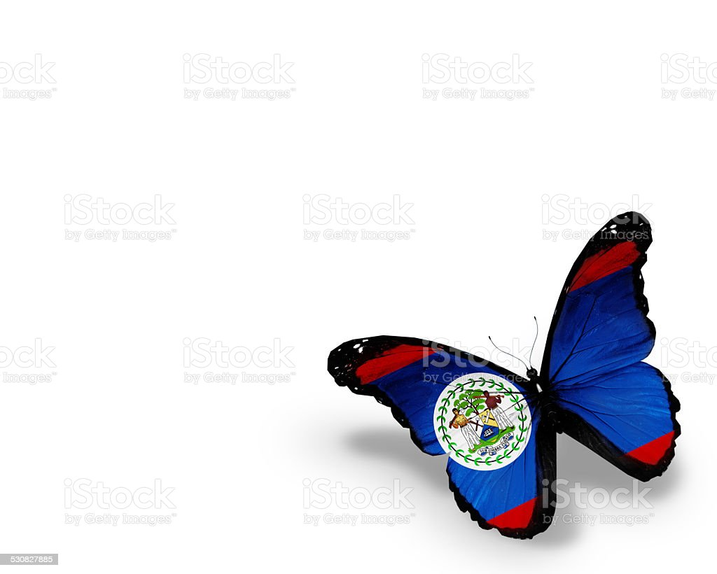 Belize flag butterfly, isolated on white background stock photo