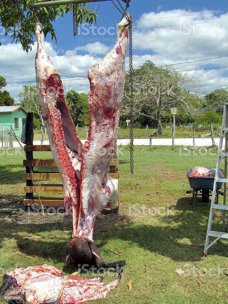 Belize Men Butchering a Cow 1 royalty-free stock photo