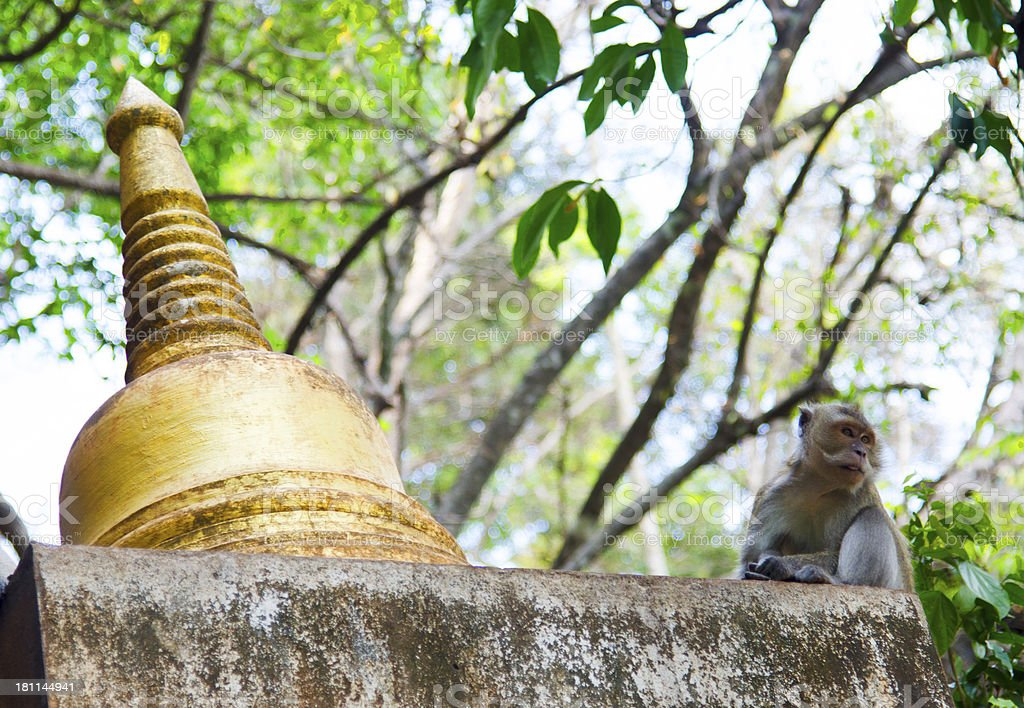 Bell and monkey royalty-free stock photo