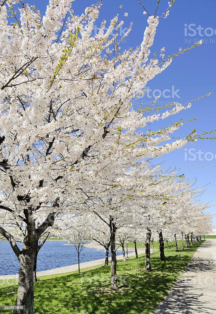 Belle Isle in Spring royalty-free stock photo