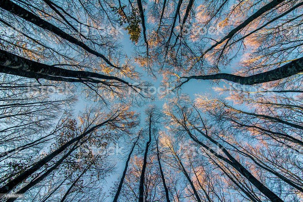 Below Tree stock photo