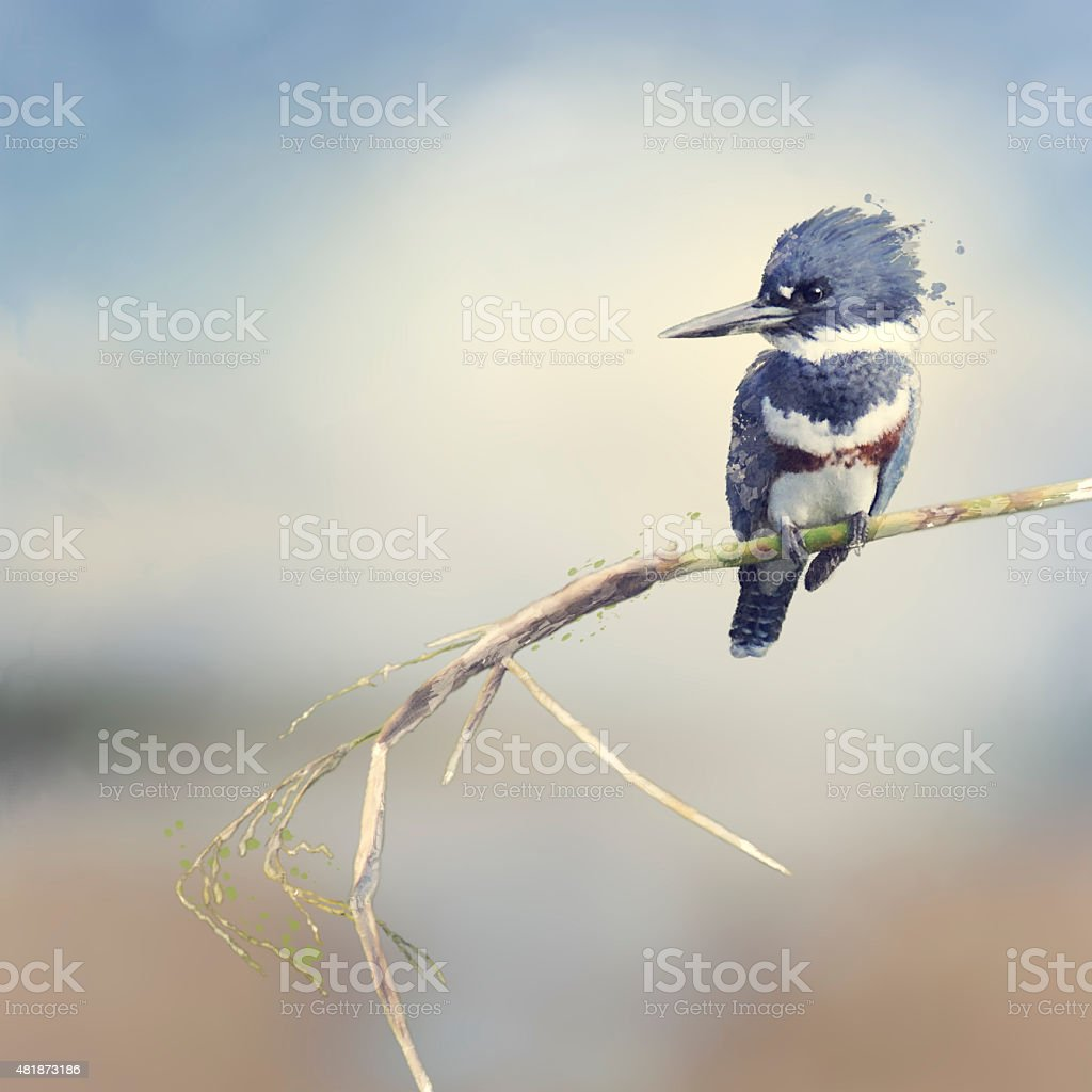 Belted Kingfisher Watercolor vector art illustration