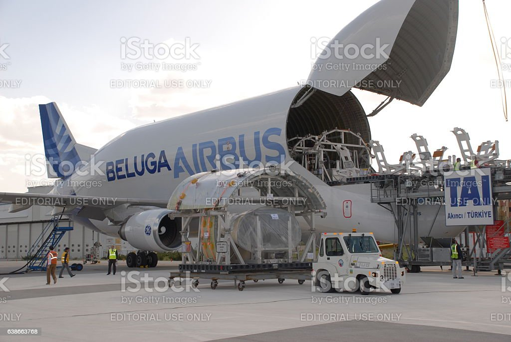 Beluga stock photo