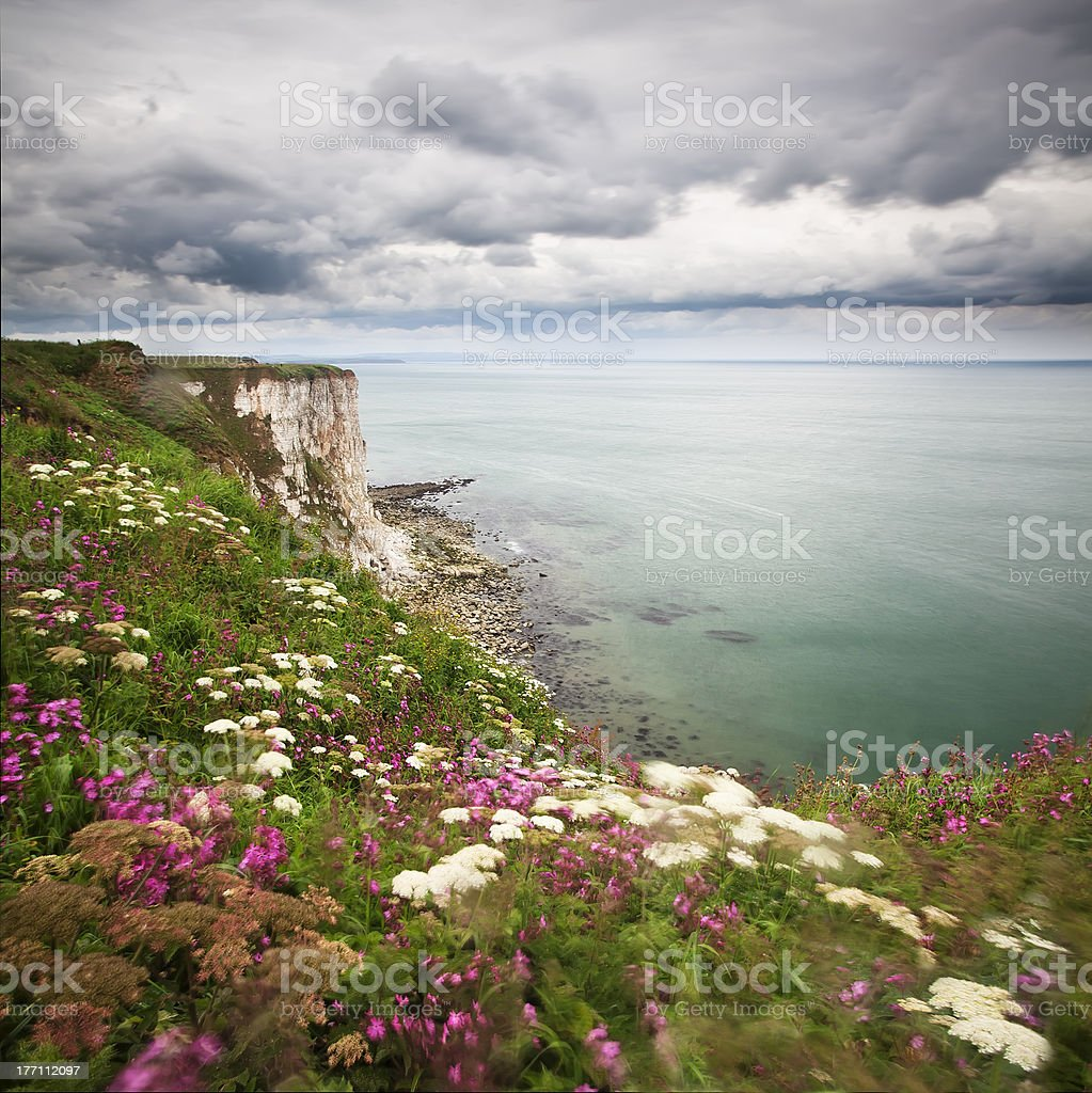 Bempton Cliffs stock photo